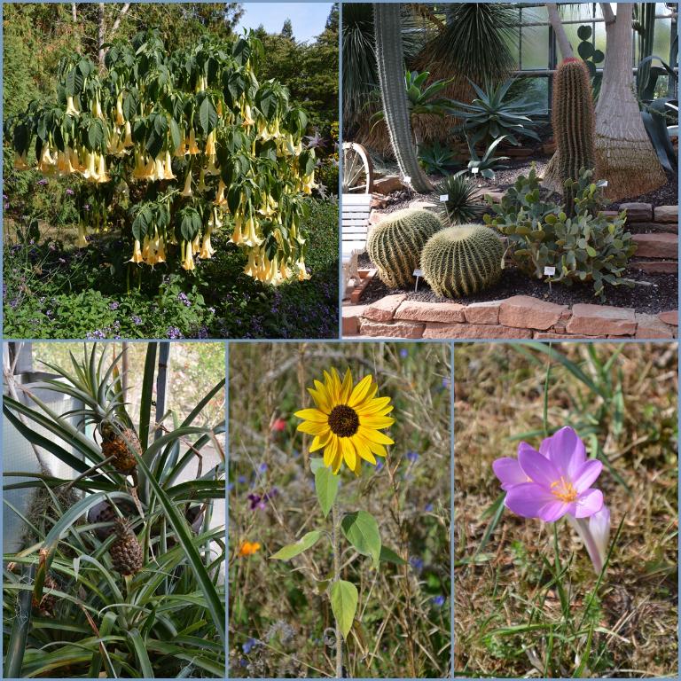 botanic48dni-vrt
